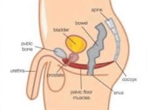 Uterus chart